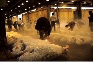 Japanische Auktion: Thunfischmarkt