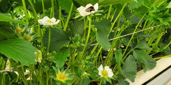 Gewächshaus Blüten