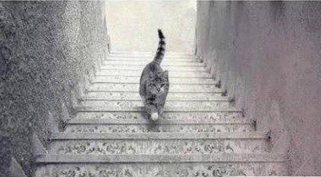 Liquidität Katze rauf oder runter