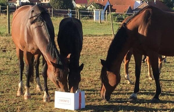 Pferde am futtern